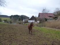 Mitten auf der Weide